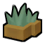 Agave fruit.png