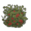 Raspberry bush.png