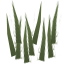 Plant PovertyGrass.png