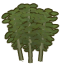 Bamboo tree.png